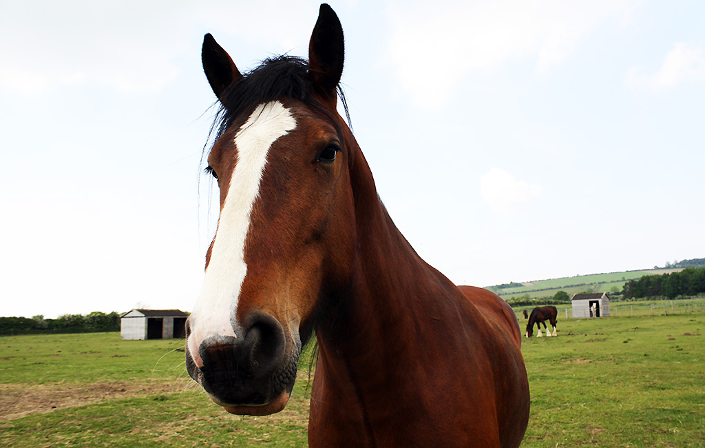 One of the beautiful horses at Willow Tree Farming.