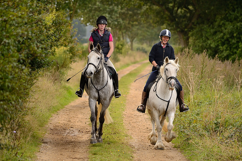 Horse riding along quiet Norfolk back lanes.