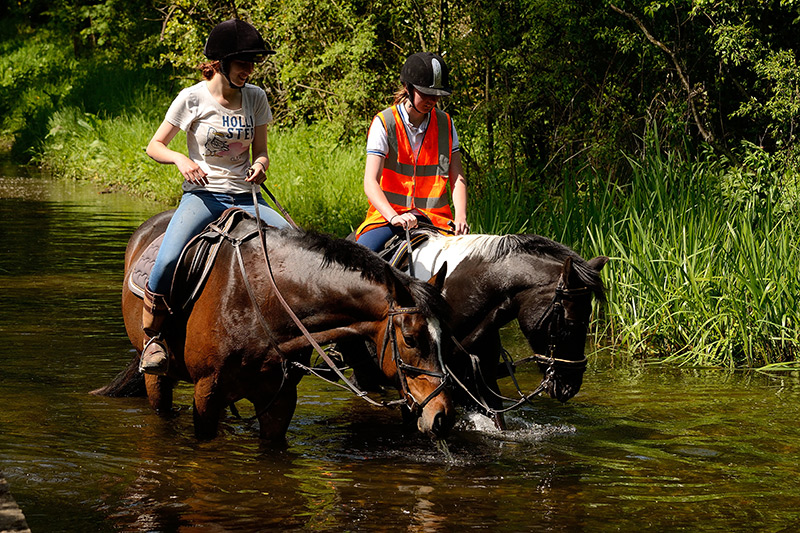 Horse in the Ford.